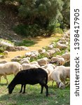 huge sheep and goat herd... | Shutterstock . vector #1398417905