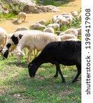 huge sheep and goat herd... | Shutterstock . vector #1398417908