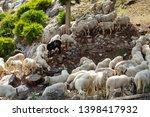 huge sheep and goat herd... | Shutterstock . vector #1398417932