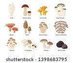 Large Mushroom Set Of Vector...