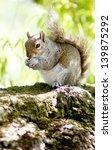 squirrel | Shutterstock . vector #139875292