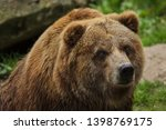 mainland grizzly  ursus arctos... | Shutterstock . vector #1398769175