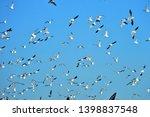 oil pump and a beautiful bird   Shutterstock . vector #1398837548