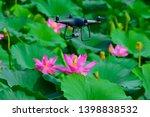 blooming lotus flowers in the...   Shutterstock . vector #1398838532