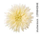 gerbera daisy flower  gerbera... | Shutterstock . vector #1398840848