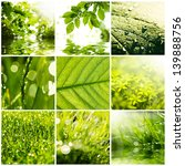 collage of green grass and... | Shutterstock . vector #139888756