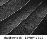 black and white gray leaves... | Shutterstock . vector #1398941822