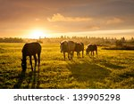 Rural Landscape With Grazing...