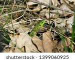 a cute green lizard hiding... | Shutterstock . vector #1399060925