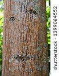 deciduous natural tree trunk ... | Shutterstock . vector #1399064552