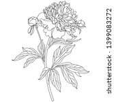 peony flowers on a white...   Shutterstock .eps vector #1399083272