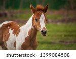 child horse little horse the... | Shutterstock . vector #1399084508