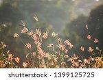 morning grass and dew bokeh...   Shutterstock . vector #1399125725