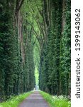 narrow forest road with tall... | Shutterstock . vector #1399143062