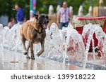 running dog along water fountains in the city - stock photo
