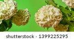 white viburnum flowers in the... | Shutterstock . vector #1399225295