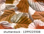 red and yellow foliage close up ... | Shutterstock . vector #1399225508