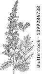 artemisia pontica is evergreen... | Shutterstock .eps vector #1399286738