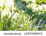 green young grass in the...   Shutterstock . vector #1399298945