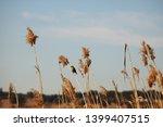 Female Masked Weaver Bird On A...