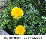 dandelion.art beautiful spring... | Shutterstock . vector #1399422008