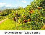 orange groves and mountain... | Shutterstock . vector #139951858
