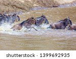 crossing kenya. national park.... | Shutterstock . vector #1399692935