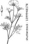 Escholzia Maritima Is A Species ...