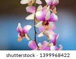 closeup photo of orchid flower... | Shutterstock . vector #1399968422