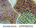 deciduous cypress forest in... | Shutterstock . vector #1399986032
