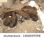 Homeless Puppy Homeless Puppies ...