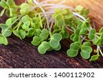 green and healthy microgreens... | Shutterstock . vector #1400112902