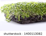 microgreens and healthy sprouts ... | Shutterstock . vector #1400113082