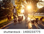 Stock photo dog walker at work couple dog walker walking with dogs in the park 1400233775