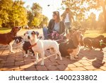 Stock photo dogs on walk with professional woman dog walker on the street 1400233802