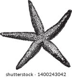 common starfish is the most... | Shutterstock .eps vector #1400243042