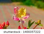 the first spring flower of... | Shutterstock . vector #1400357222