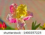 the first spring flower of... | Shutterstock . vector #1400357225