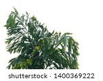 tropical rainforest palm leaves ... | Shutterstock . vector #1400369222