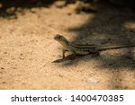 green lizard in park  lizard... | Shutterstock . vector #1400470385