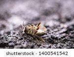 bee on extermination. dead dead ... | Shutterstock . vector #1400541542
