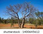 boab trees growing in western... | Shutterstock . vector #1400645612