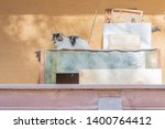 cat napping in the shade on a... | Shutterstock . vector #1400764412