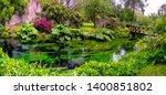 Lush Vegetetation Musk In River ...