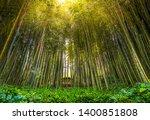 dense bamboo zen grove forest sun rays filter through trees in zen grove .