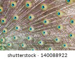 Closeup of a peacock tail with its colourful feathers fanned out. - stock photo