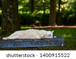 cat taking a nap on the bench... | Shutterstock . vector #1400915522