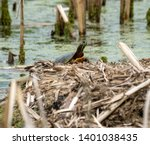 turtle sunbathing on a muskrat... | Shutterstock . vector #1401038435