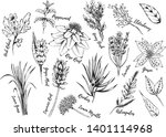 herbs and foliage inky hand... | Shutterstock .eps vector #1401114968