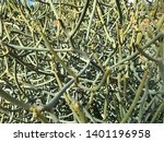 abstract details of green tree... | Shutterstock . vector #1401196958